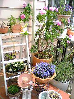 *お庭。。♪*