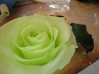 Hearts Bloomまつりにおでかけ。