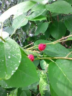 berry♪berry♪
