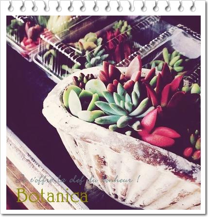 ◆ぷりぷり多肉植物寄せ植え会◆