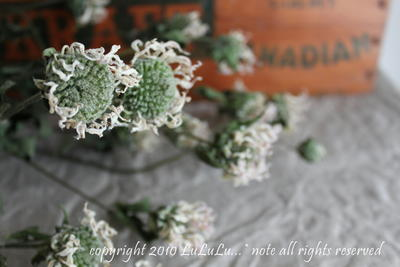 香を楽しむ花