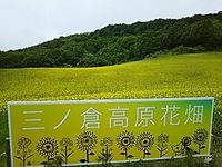 菜の花畑とひめさゆり祭り^^