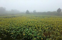 霧の布引高原・・・