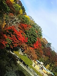 霞ヶ城公園の紅葉^^