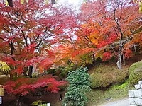 霞ヶ城公園の紅葉も終盤かな^^