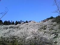 桜巡り^^二本松^^つづき