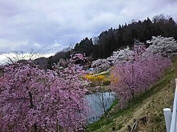 桜巡り^^あちこち続き^^