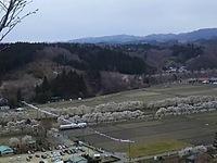 桜巡り^^田村^^小野^^そして岳へ^^