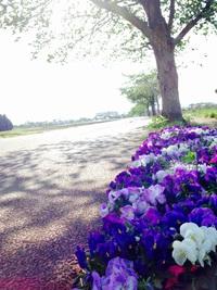 花見の初夏