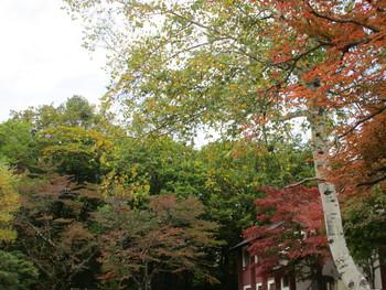 甲子高原の紅葉