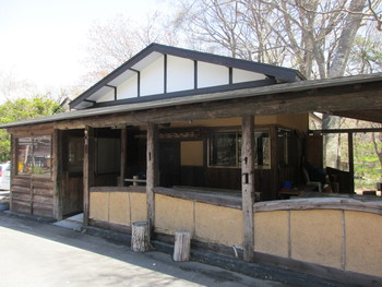 新甲子温泉のサクラ