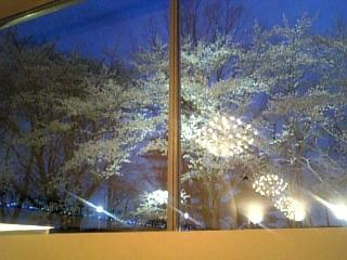 夜桜inアンジェロ♥