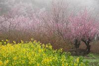 花見山#2 2010/04/15 20:00:00