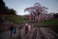 「三春滝桜」#3 2010/05/04 20:00:00