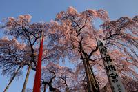 「三春滝桜」#2 2010/05/01 20:00:00