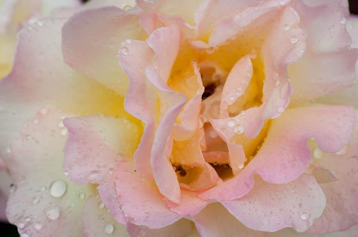 薔薇って漢字でかけますか?私は書けません