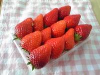 イチゴを買いに♪(1歳7ヶ月10日目)