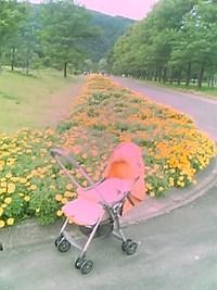 2度目のお散歩(生後53日目)