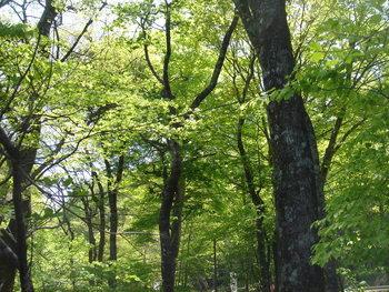 新緑が美しいです!