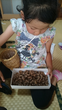 カミキリ虫とせみの抜け殻