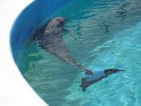 イルカのフジは日向ぼっこ