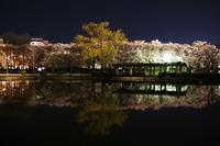夜の開成山公園