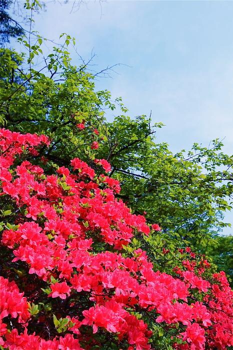 ホニャララ植物園へ