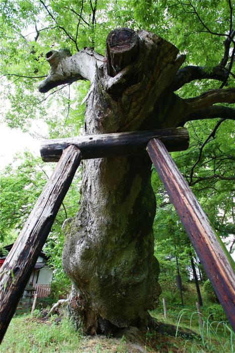 福島県庁の隣の公園へ