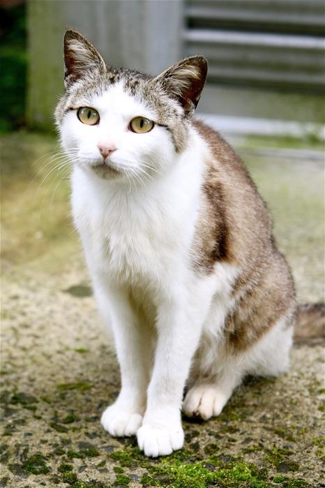 田代島のネコvol.3(らら♥たいむにて)