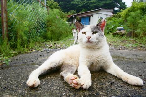 田代島のネコvol.1