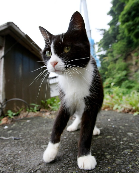 田代島のネコvol.2(らら♥たいむにて)
