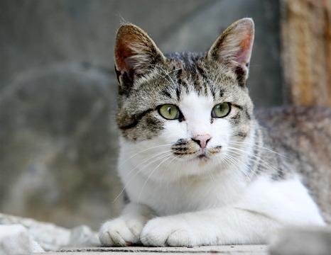 田代島のネコvol.4(らら♥たいむにて)