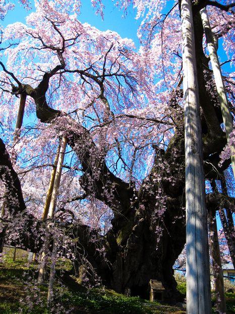 バイクで花見(滝桜)1