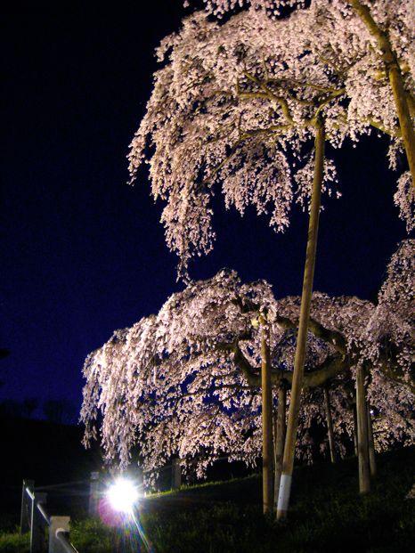 バイクで花見(滝桜)3