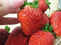 イチゴとひとり言 by 須賀川のイチゴ