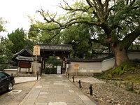 素敵なお庭が眺められる!青蓮院門跡(京都)