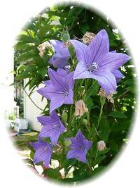 ✿✿夏庭の花々✿✿