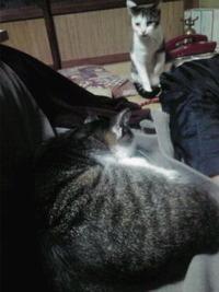 集まってくる…猫たち