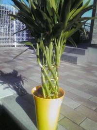 観葉植物…枯れちゃうんだよね