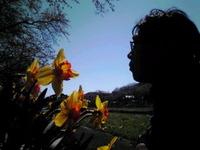 綺麗でした…水仙の花