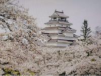 日本100名城の1つ、鶴ヶ城(若松城)と桜